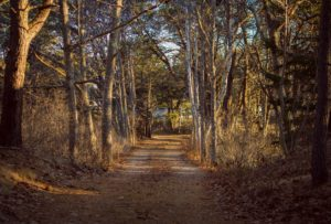A paved trail in a forest