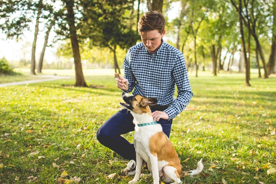 A man playing with a dog in a park.
